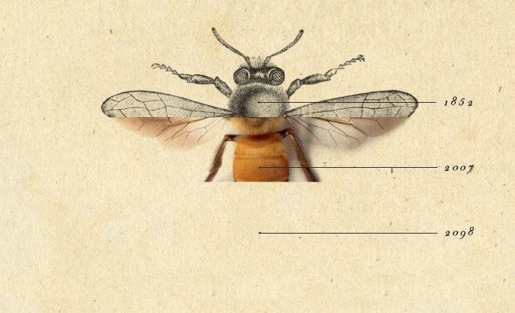 lunde_historia_pszczół-752×404